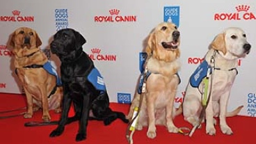 Guide dogs on the red carpet