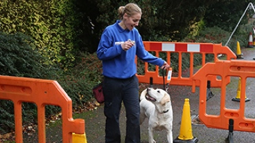 Guide dog training with a trainer and an obstacle