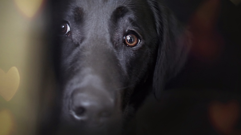 Close up of dog's face