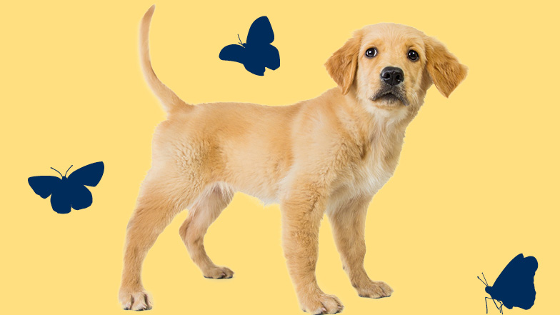 Standing puppy surrounded by images of three butterflies