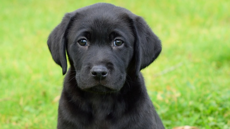 Black puppy sat outside on the grass