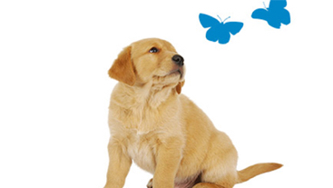 Puppy looking at 2 blue butterflies