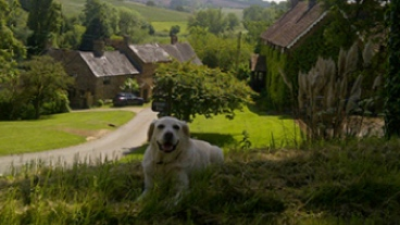 Rehomed guide dog Dean laying in the grass in front of cottages