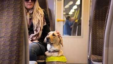 A guide dog owner and guide dog sat on a train