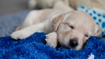 A puppy sleeping on a blanket