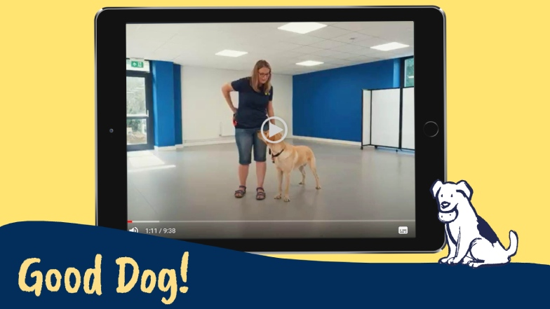Example of Good Dog! training video