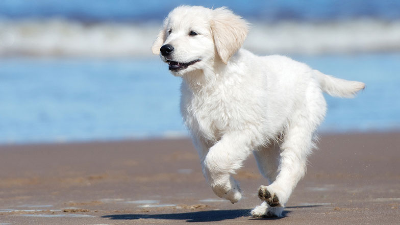Puppy running on a beach