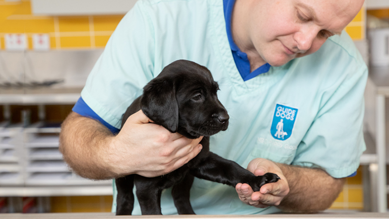 Guide Dogs staff checking Coco's paws