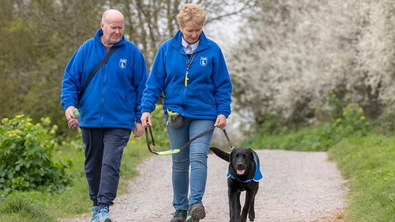 Milo in his puppy walking jacket walking alongside two smiling Guide Dogs trainers