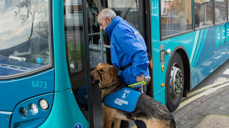 Zac in his blue puppy walking jacket walking onto a bus with his puppy walker