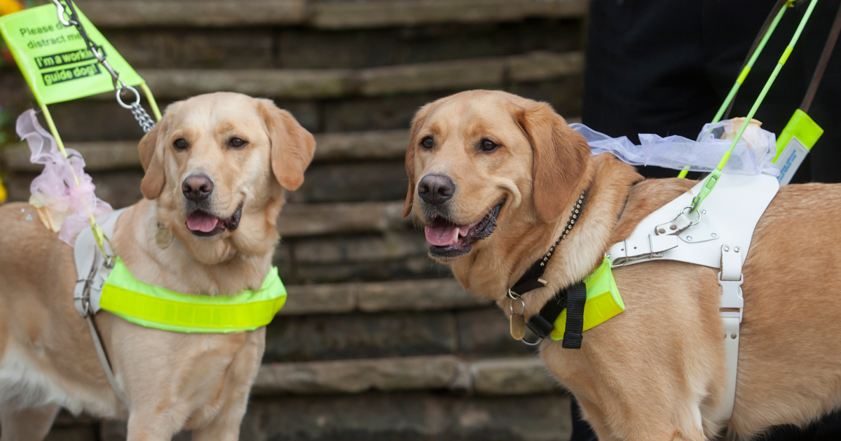 Guide Dogs Training Schools Across The UK | Guide Dogs