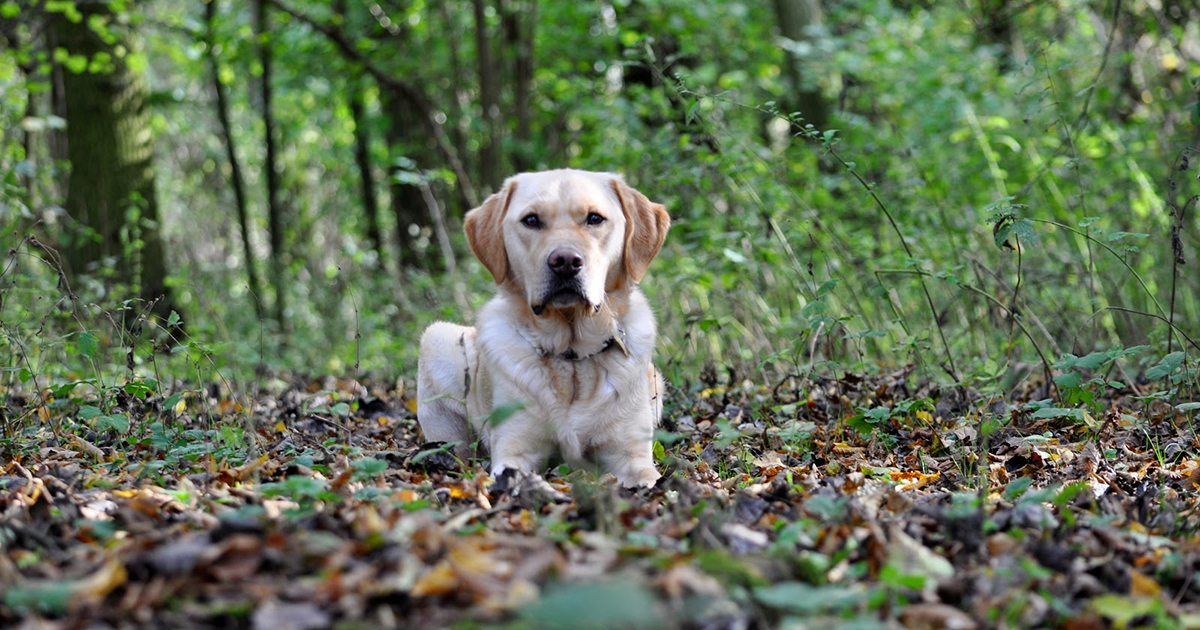 Guide Dog Rehoming >> Re Homing A Retired Or Withdrawn Guide Dog Guide Dogs